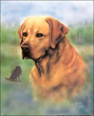 Dog Yellow Lab Prints size 8x10 8-473