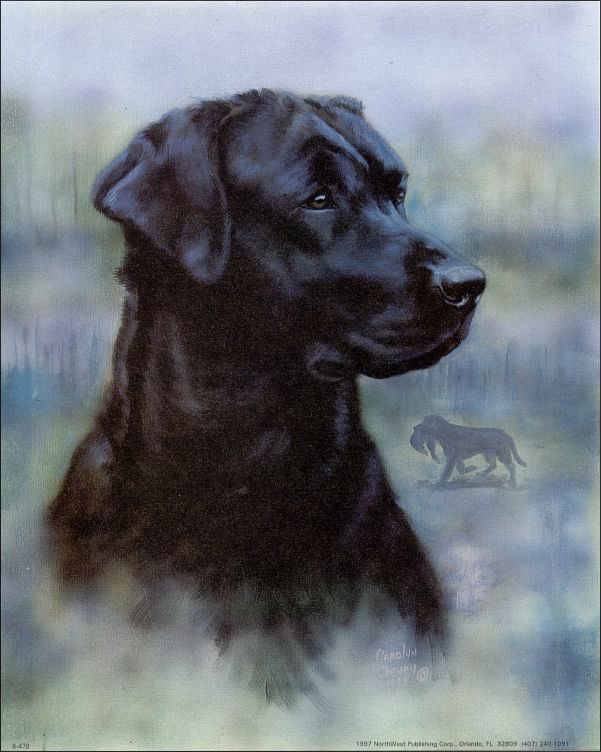 Black Lab Dog Paper Tole 3d Kit Size 8x10 8 470